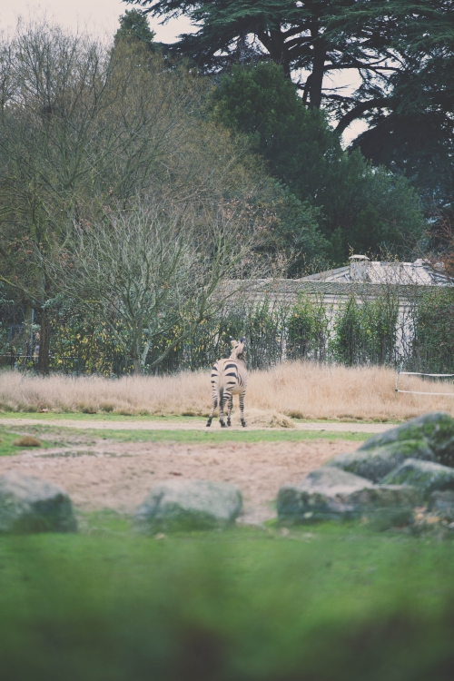 parc de la tête d'or,lyon,balade au parc de la tête d'or,zoo du parc de la tete d'or,flamant rose le blog,blog nantes,lifestyle nantes,aude arnaud