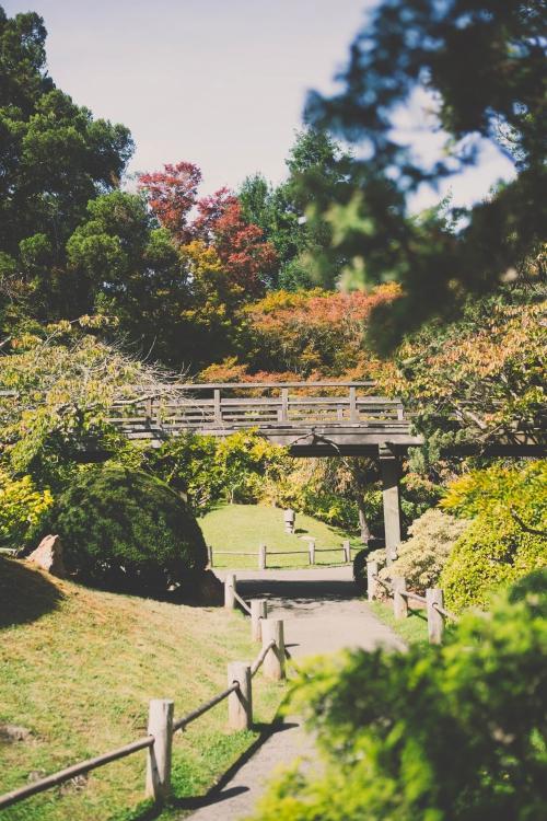 golden gate,golden gate park,san francisco,californie