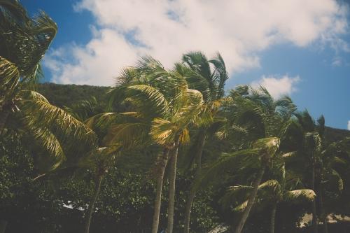 jost van dyke island,jost van dyke,jost van dyke painkiller,flamant rose le blog,blog nantes